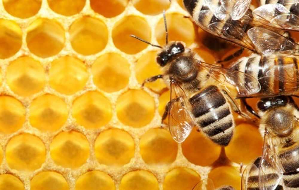 Что такое апитерапия (лечение пчелами)?
