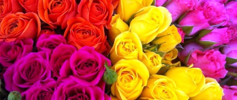 Где в Москве можно выбрать хорошие розы?
