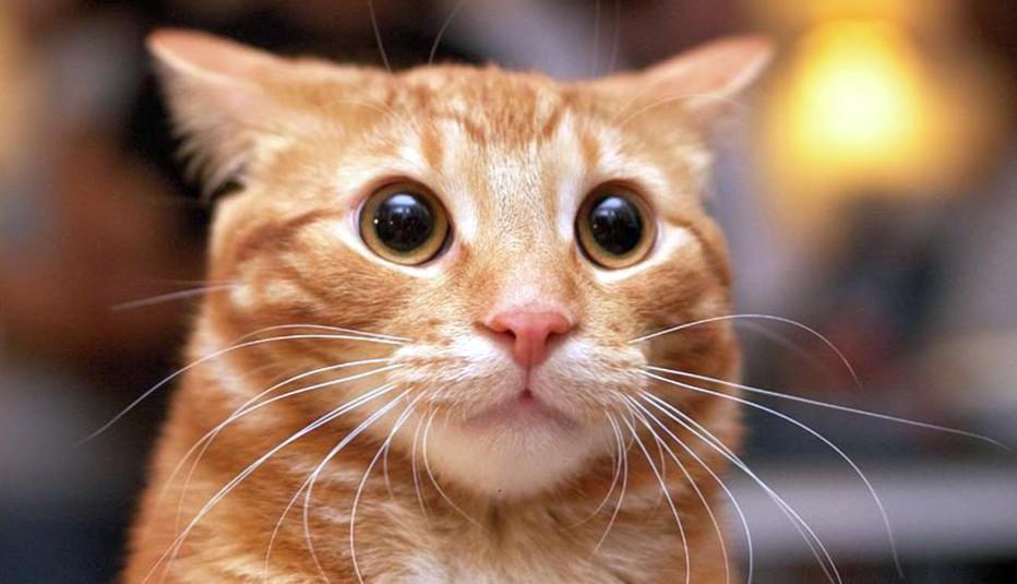 Все про кошек, котов и котят…