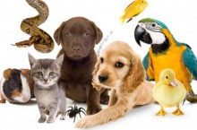 Palladium — это только качественные лечебные препараты и прочее для животных