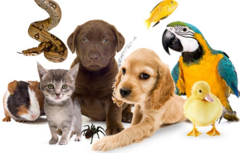 Палладиум — это все необходимое для животных