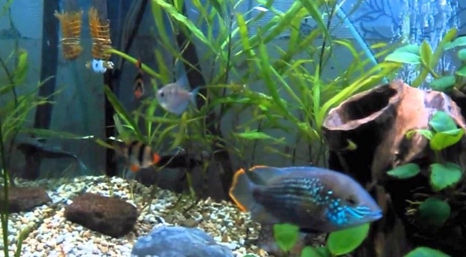 Что такое аквариумистика?