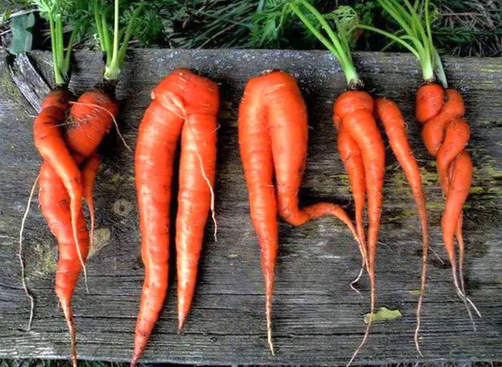 Морковь: несколько полезных способов применения